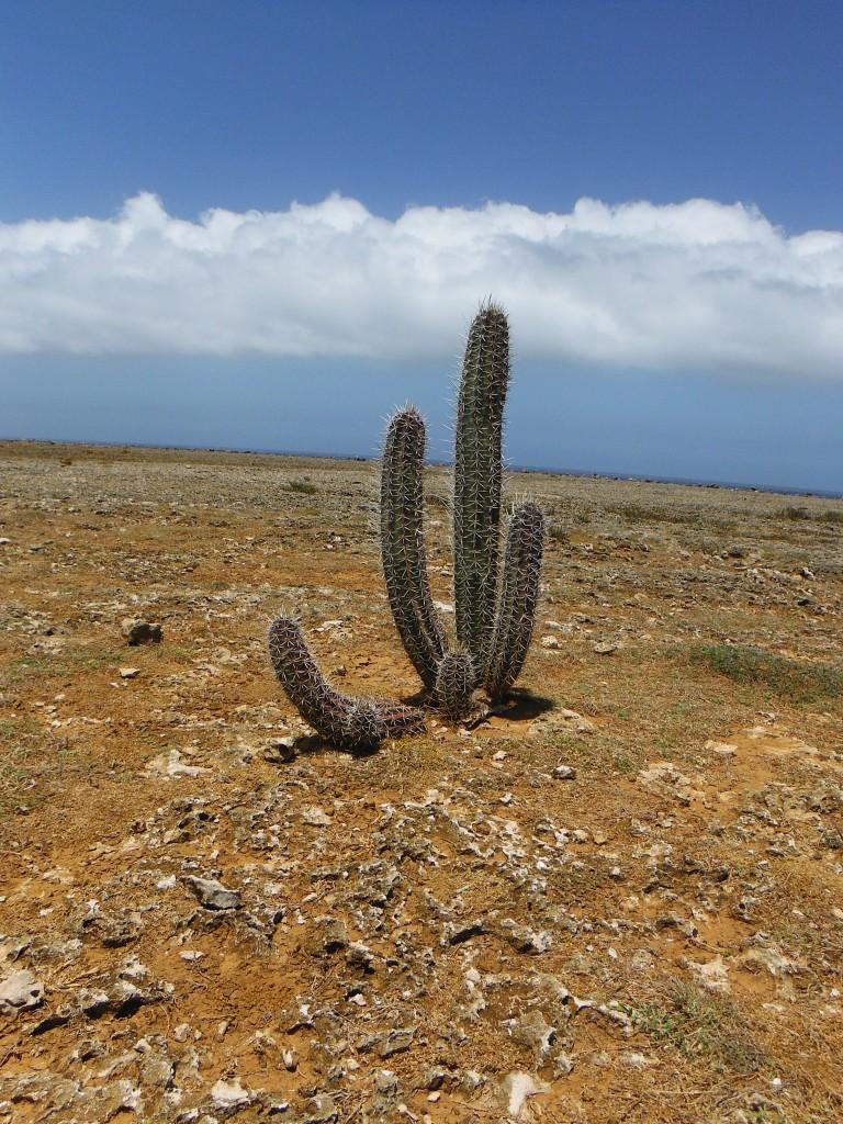 Ein Hoch auf den Kaktus