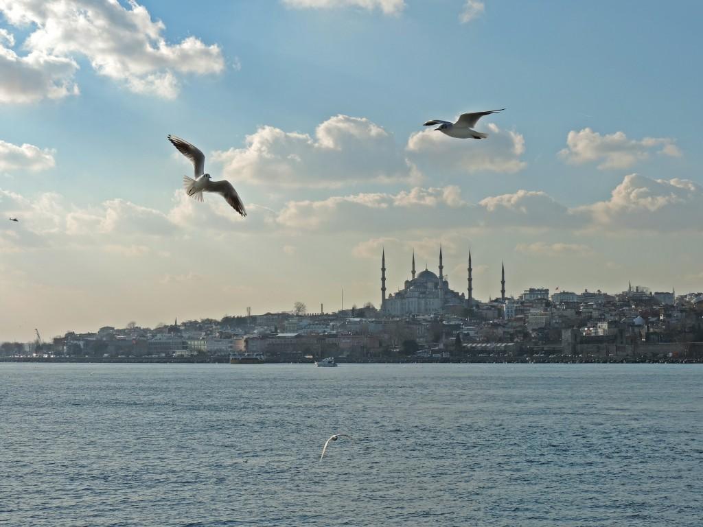 Möwen über Istanbul