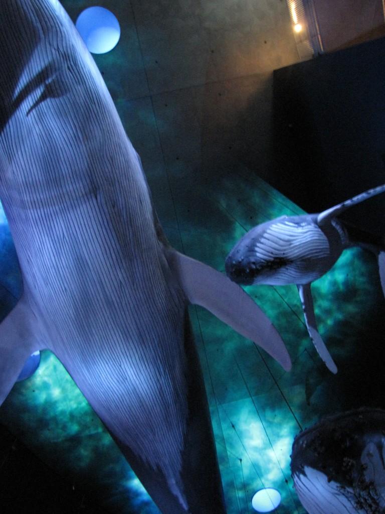 schwebende Wale