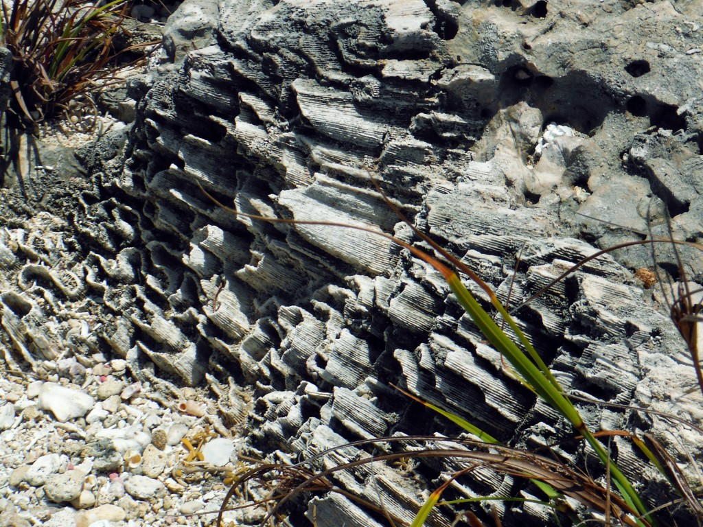 Watamula Korallen